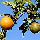 Im Land der Orangen