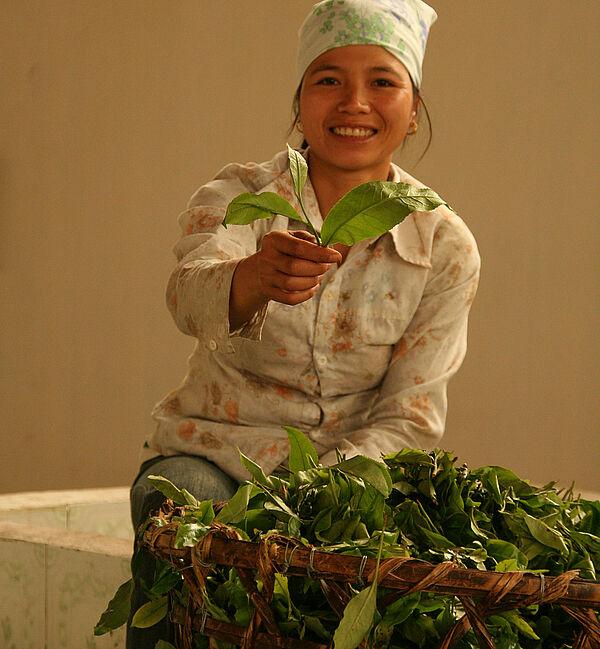 Van Chan Organic Farmers