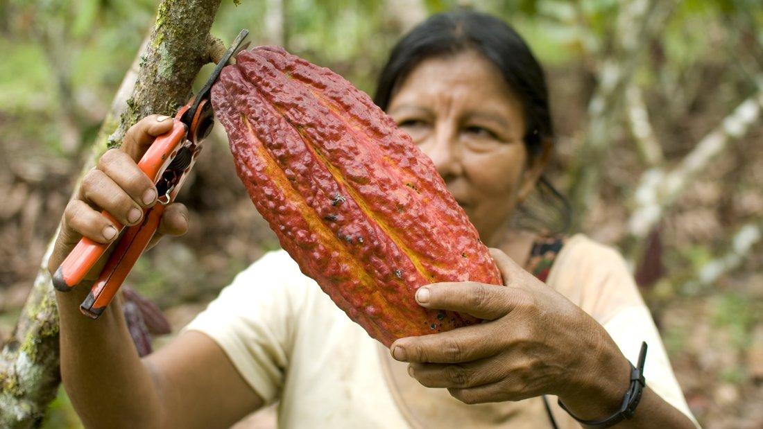 Foto: GEPA - The Fair Trade Company/C. Nusch