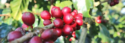 Corona: Stimmen unserer Kaffeepartner