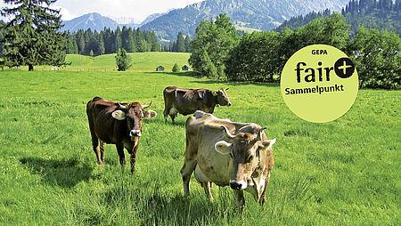 """Faire Woche 2013: Fairer Handel mit dem """"Plus"""""""