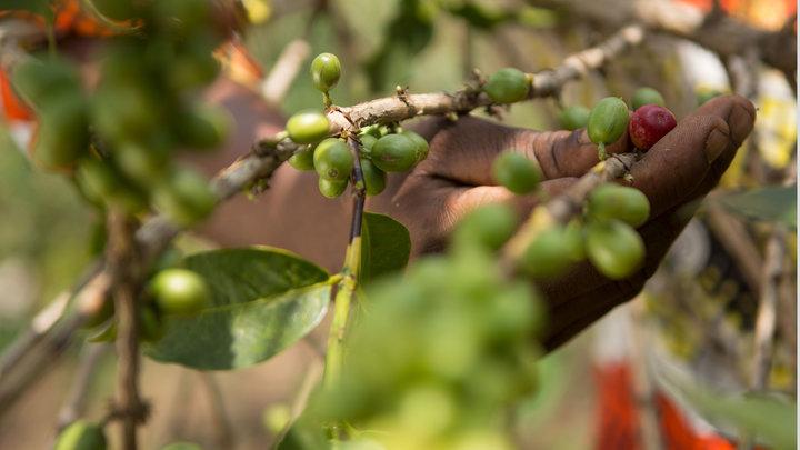 Foto: GEPA – The Fair Trade Company/C. Nusch