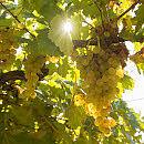 Weitere GEPA-Weine ausgezeichnet