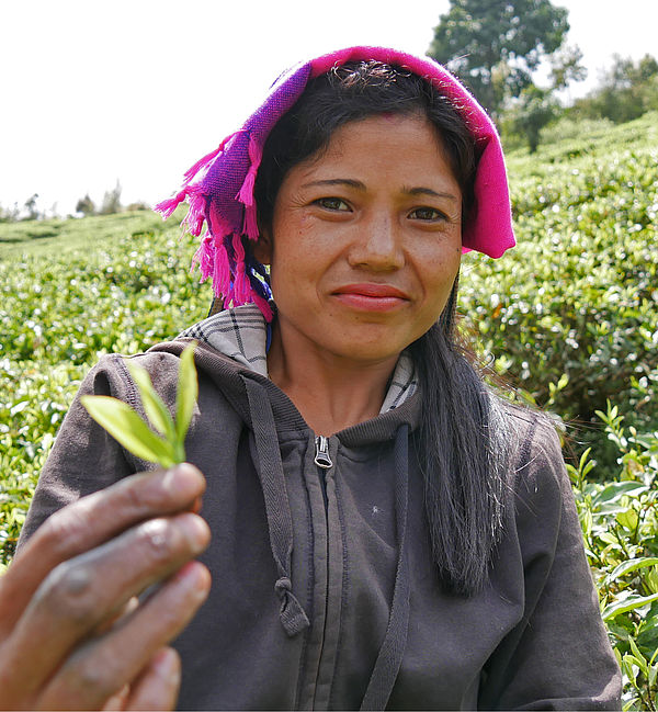 TPI (Tea Promoters India)