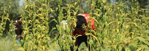 ÖKO-TEST untersucht GEPA Kräutertee Mischung