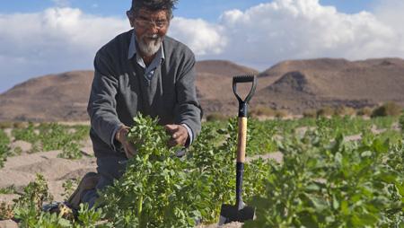 - Zivilgesellschaftliches Bündnis alarmiert: EU und Deutschland versuchen UN-Erklärung für Rechte von Kleinbauern zu verwässern.