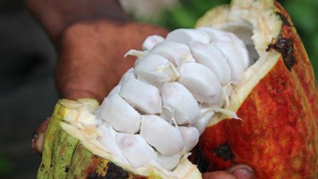 Für ein gutes Leben im Kakao-Anbau