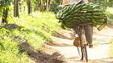 Ostafrika Nusch-Fahrrad-3 teas1x1